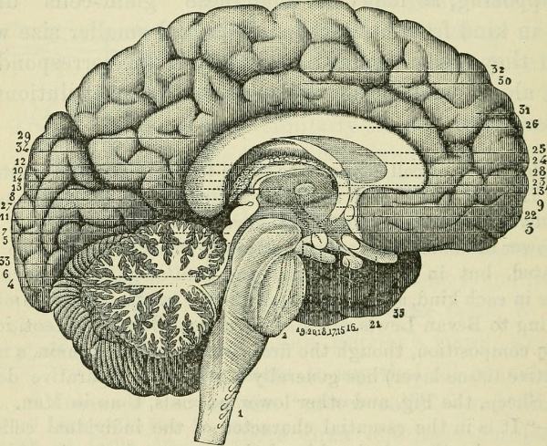 Neurofeedback for Brain Injury an alternative treatment